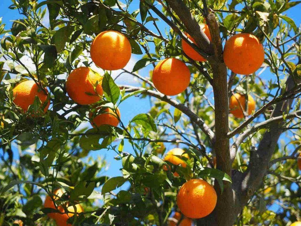 pomarańcze Hiszpania