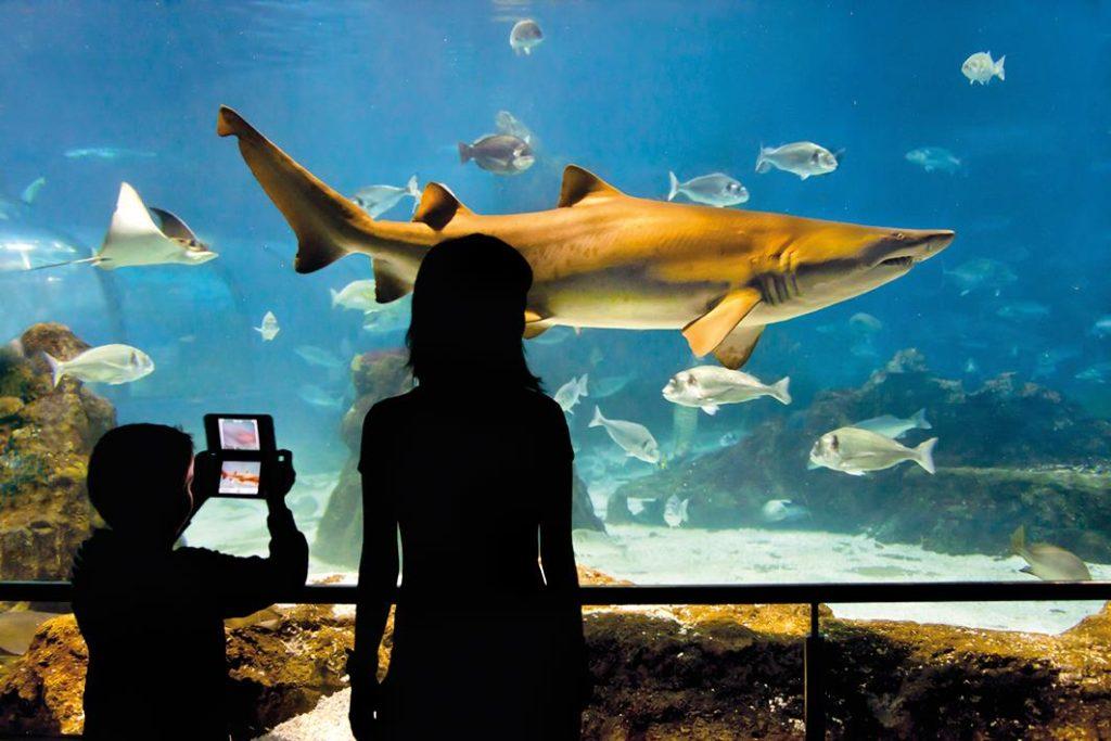 tunel aquarium Barcelona